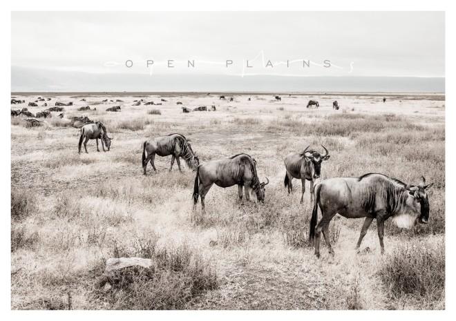 OpenPlainsInvite
