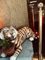 ...and a lounging tiger.